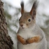 concerned squirrel